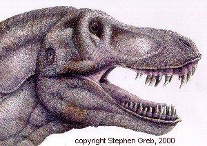 300x213 Draw T. Rex