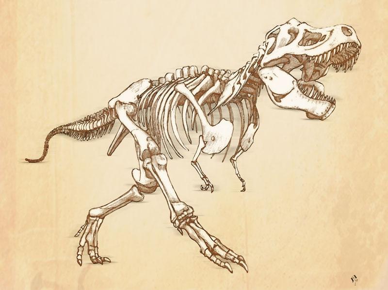 800x599 T Rex Drawing Skeleton Ink Amp Piercings Skeletons