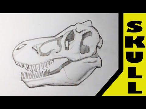 480x360 Drawing A T Rex Skull