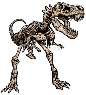 343x380 T Rex Skeleton Drawing