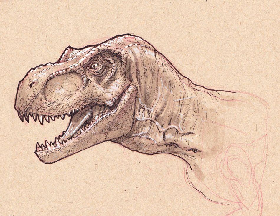 950x732 T Rex Head Study By Stephaneroux On Dinosaur