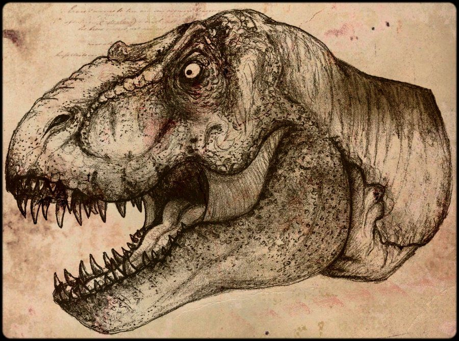 900x668 T Rex Head By Fajansik On Art I Like