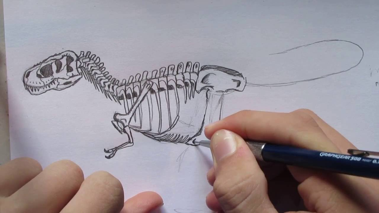 1280x720 How To Draw A T. Rex Skeleton. Danny The Dinosaur Drawer