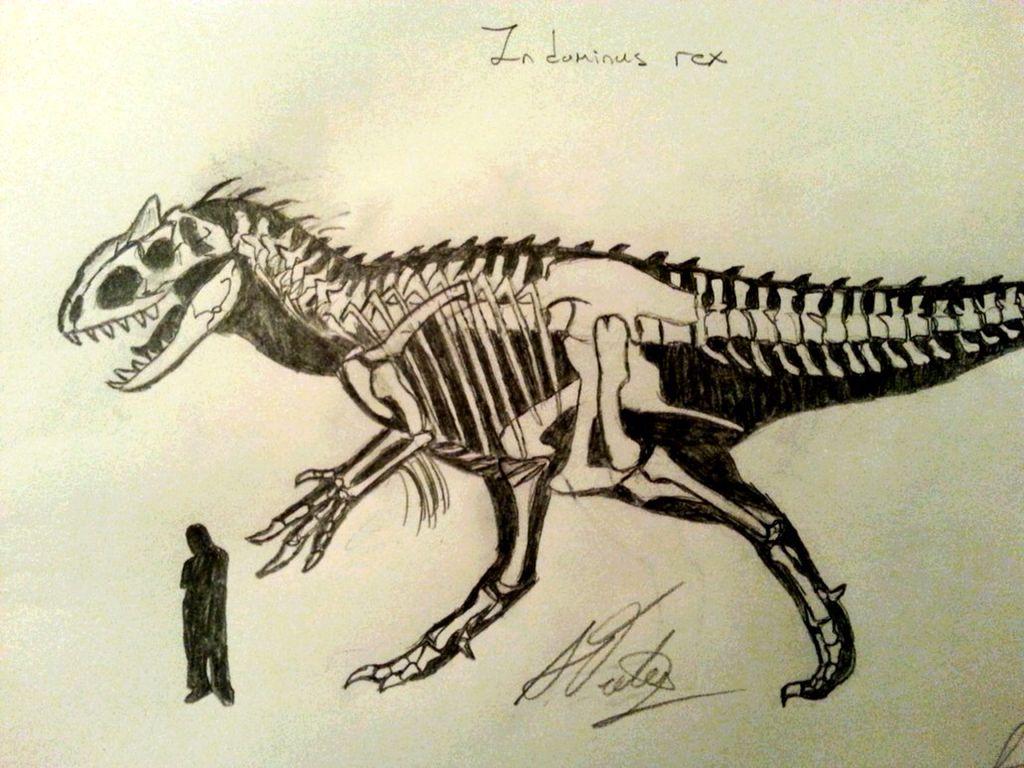 1024x768 Indominus Rex Skeleton Dinosuars Skeletons