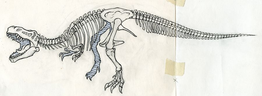 900x331 Trex Skeleton, I Really Like Flow In This Picture And How