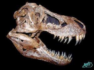 300x224 Draw T. Rex
