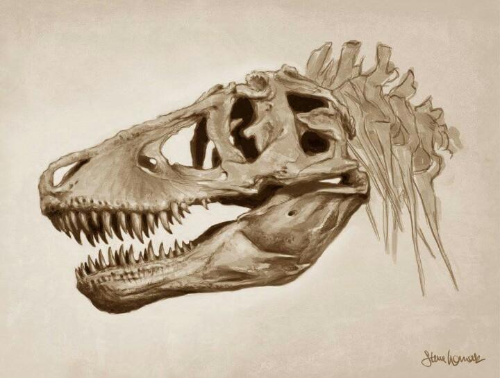 720x545 Great Drawing Of Tyrannosaurus Rex Skull Biological Illustration