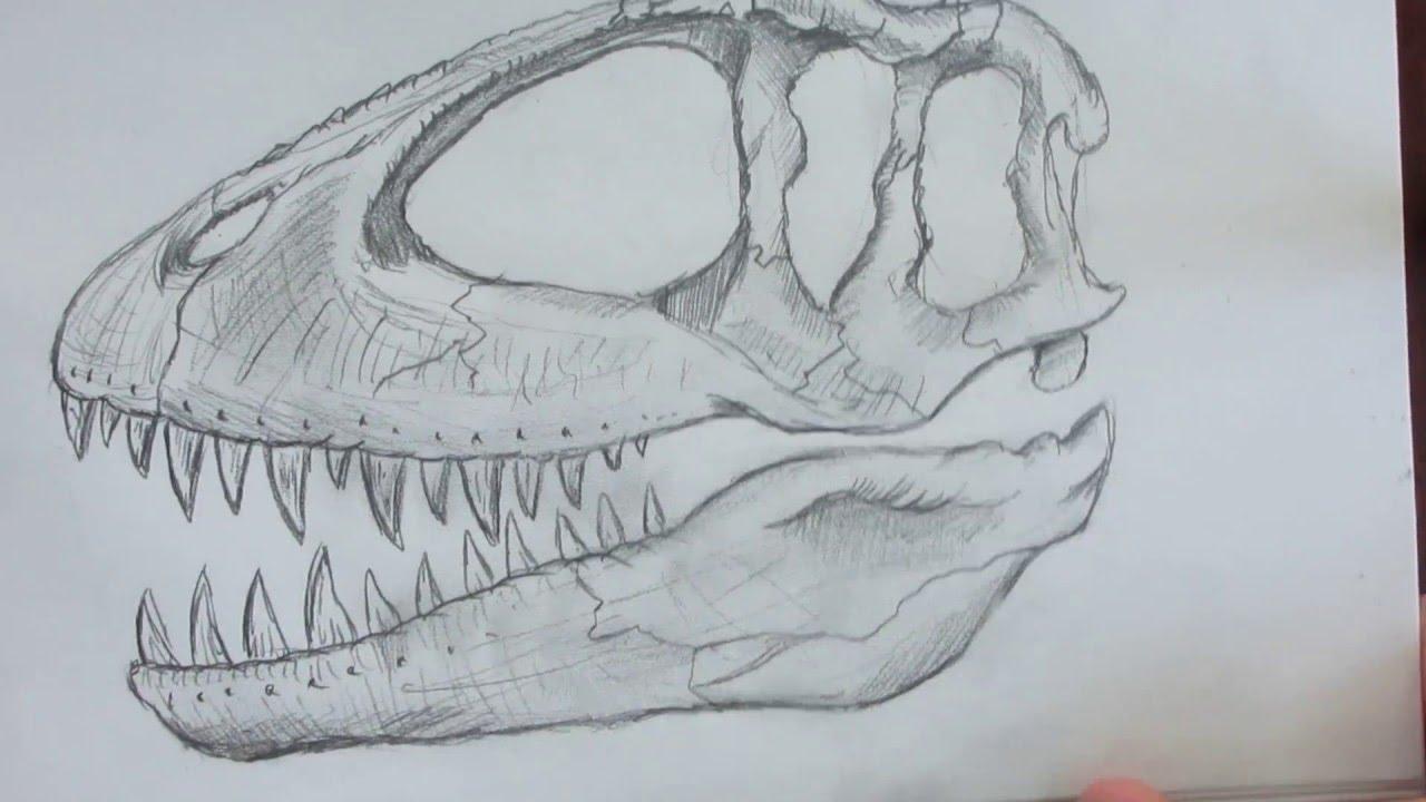 1280x720 Speed Drawing A Dinosaur Skull. Danny The Dinosaur Drawer