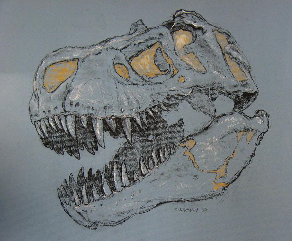 1024x846 Tyrannosaurus Rex Skull Study One Of The Most Challenging