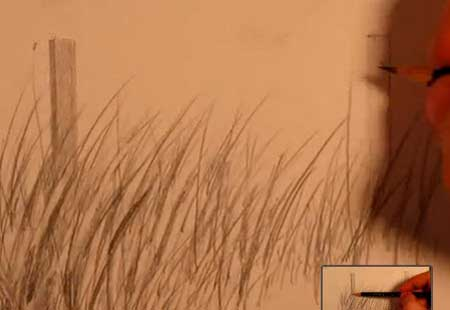 450x310 How To Draw Realistic Tall Grass