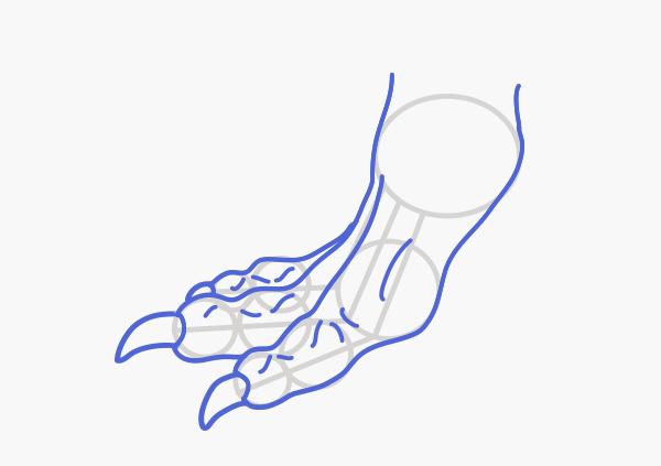 600x423 Rawr! How To Draw An Anatomically Correct Dragon