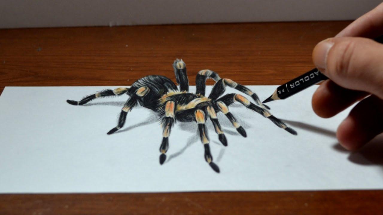 1280x720 Amazing Anamorphic Tarantula Drawing