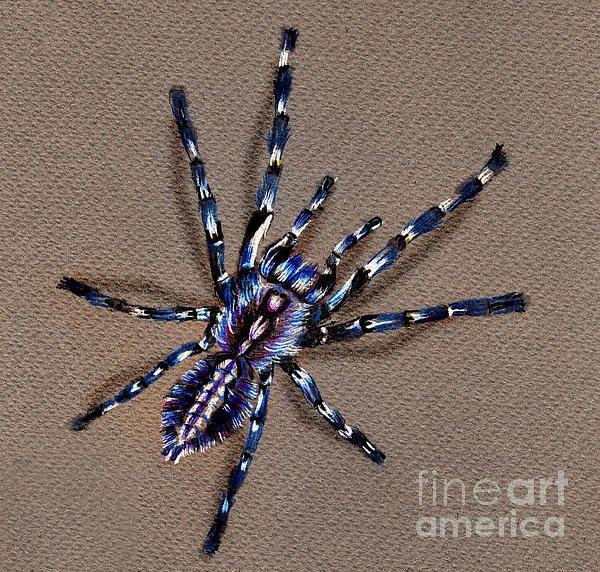 600x572 Cobalt Blue Tarantula Drawings