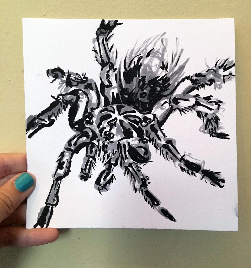 1000x1067 Tarantula Drawing