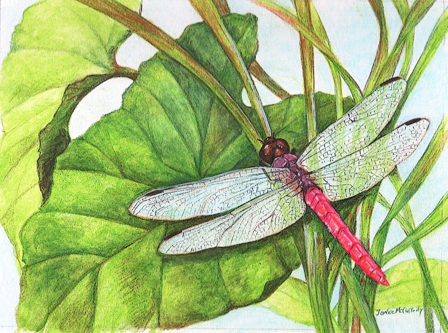 900x670 Dragonfly Drawings Skimmer Dragonfly On Taro Leaves Drawing