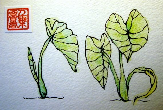 569x383 I Make Things Out Of Paper. Taro Leaves