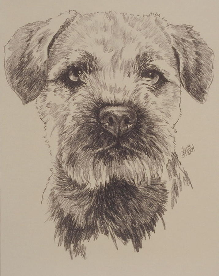 715x900 Border Terrier Drawing By Barbara Keith