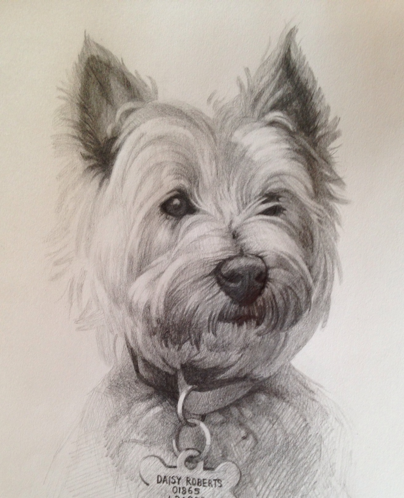 1313x1619 Drawing From Line To Life Drawings White Dogs, Dog