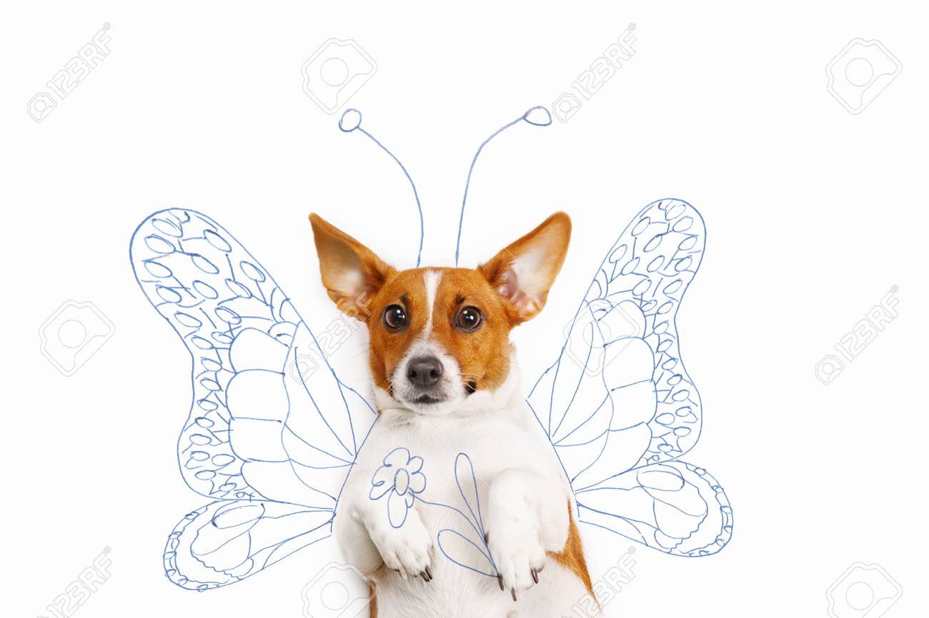 1300x866 Jack Russell Terrier With Drawing Butterfly Wings And Flower