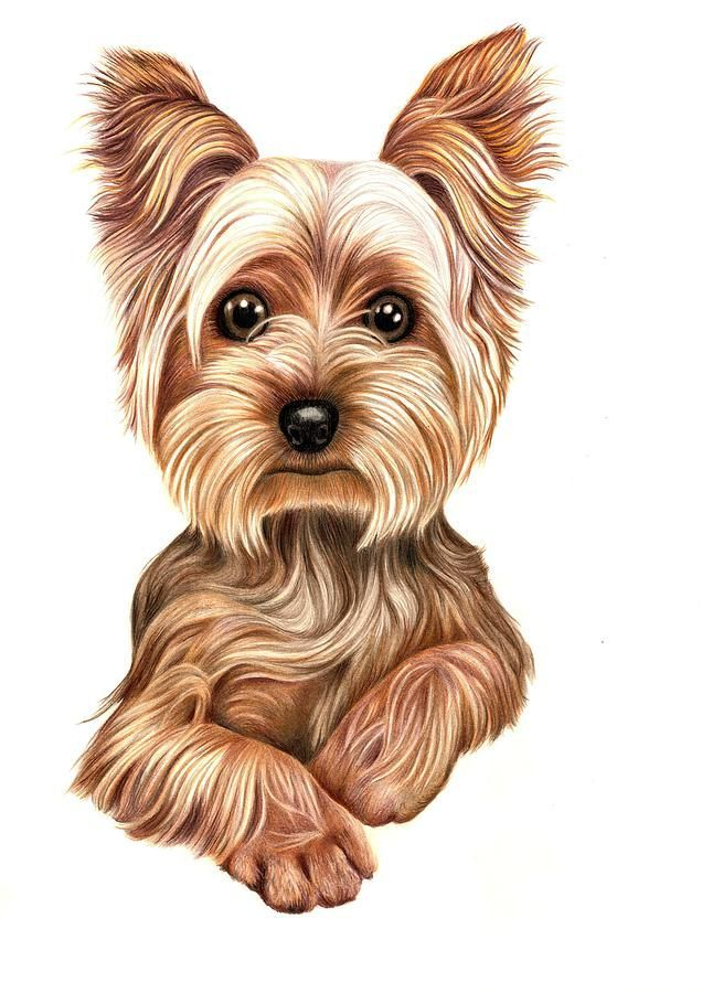 636x900 Tap For Those Doggy Lover Products