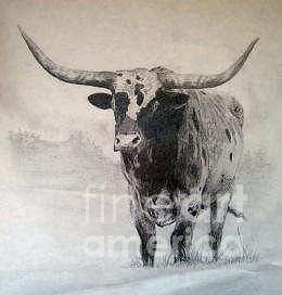 260x272 Texas Longhorn Drawing By Cassie Raynel