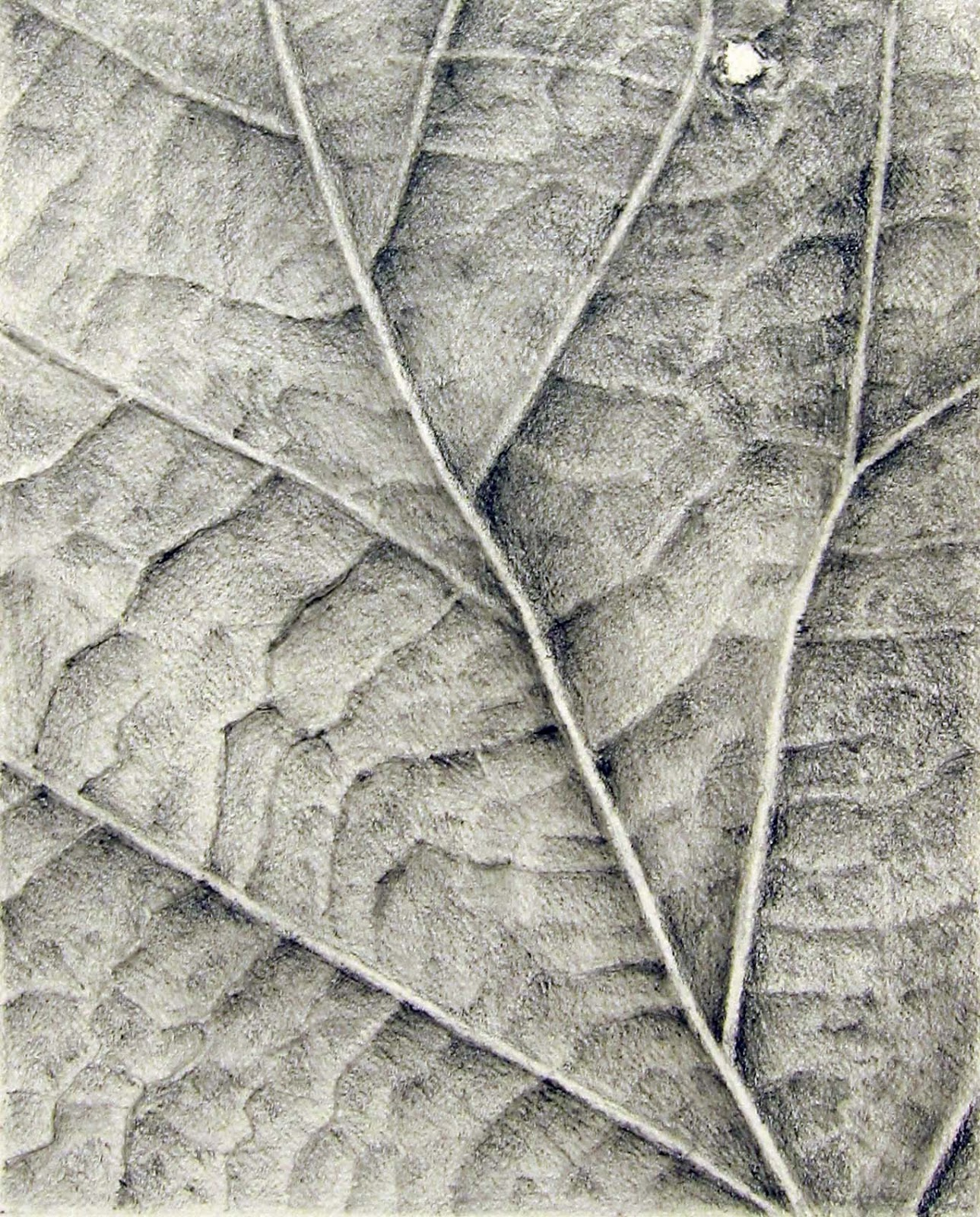 1289x1600 Image Result For Leaf Texture Drawing Draws