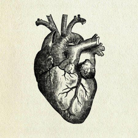 450x450 Anatomical Heart 2 Printmaking Anatomical Heart