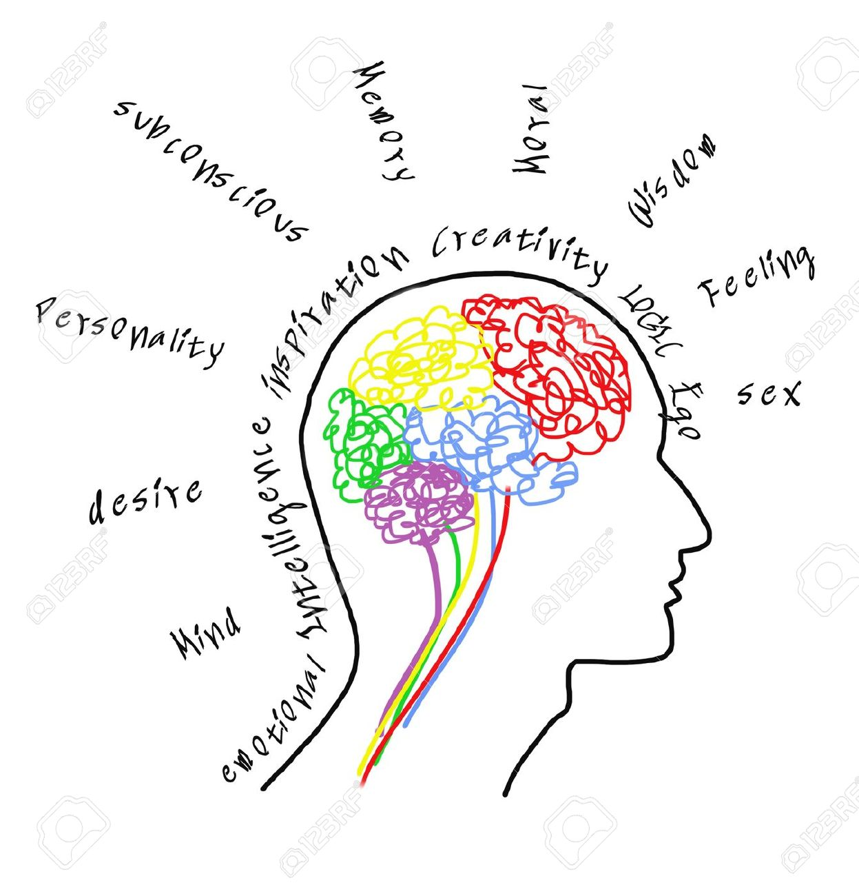 1247x1300 Brain Drawing With Wording Stock Photo, Picture And Royalty Free