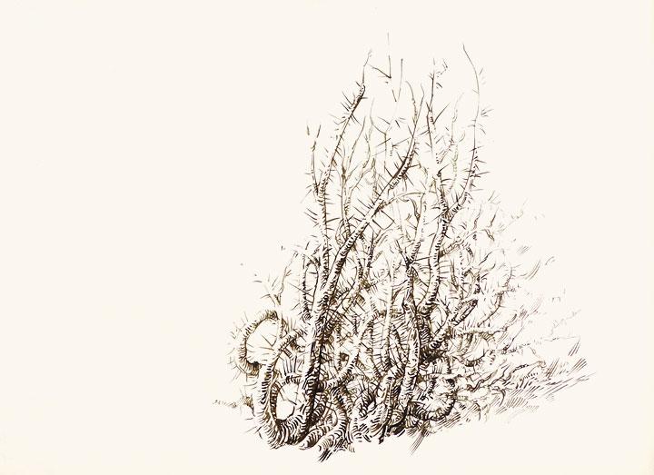 720x523 Drawn Bush Thorn