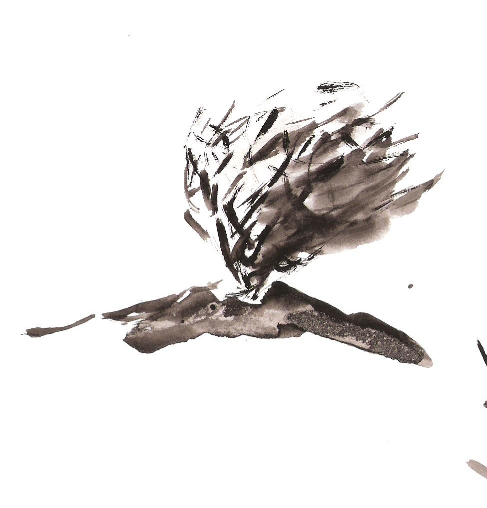 975x1018 Sketch Of A Thornbush On A Hilltop 17 03 15 1 Peter Davey