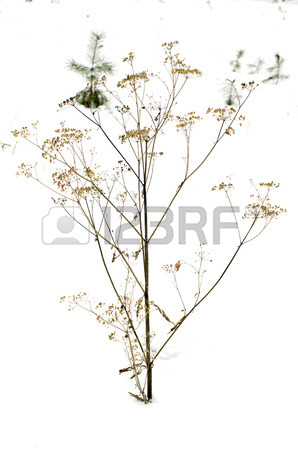 298x450 Thorn Bush Stock Photos. Royalty Free Business Images