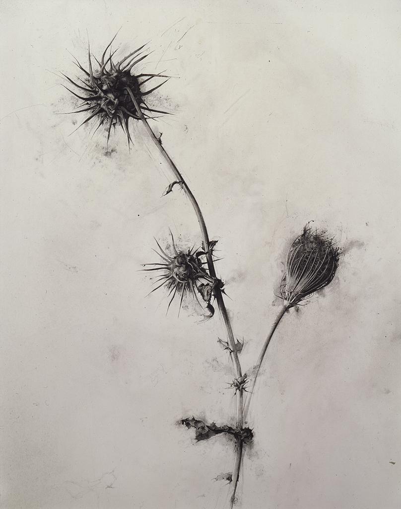 808x1024 Israel Hershberg, Selected Works Israel, Drawings And Botanical