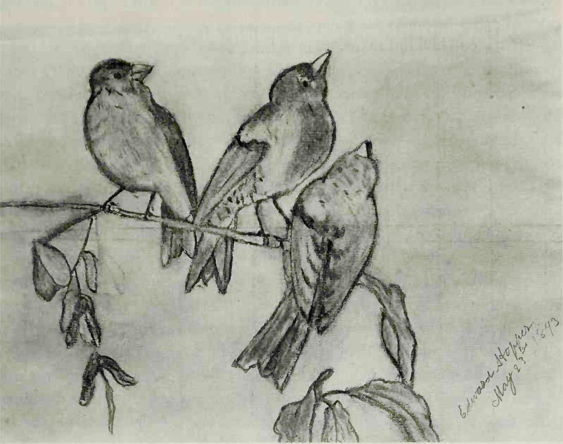 Three birds drawing at getdrawings free for personal use