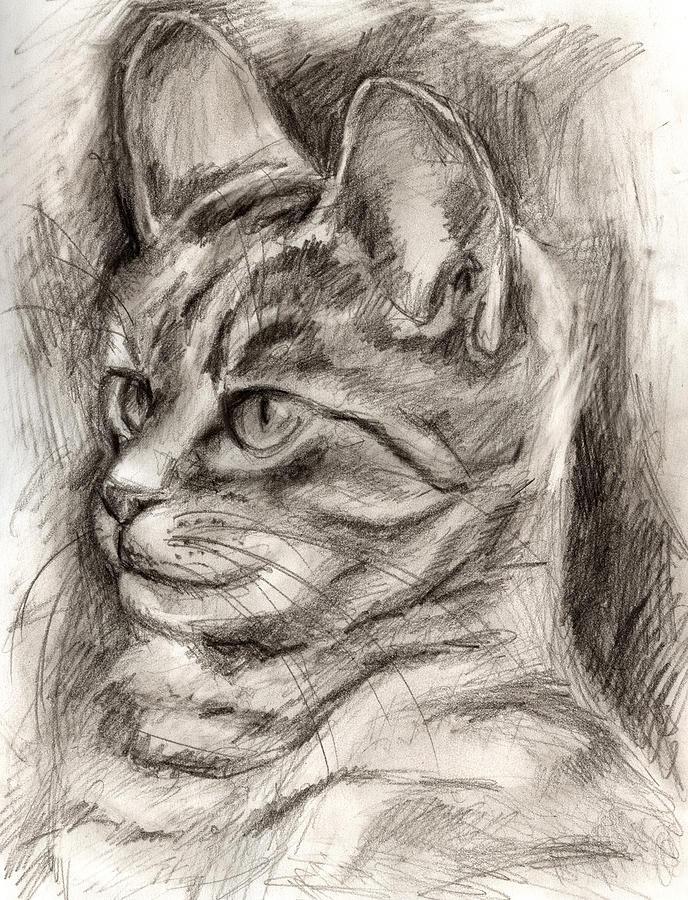 688x900 Cat Study Drawing No Three Drawing By Hiroko Sakai