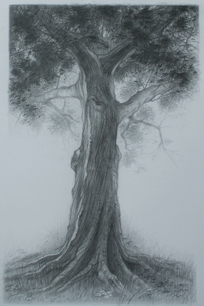 700x1051 How To Draw A Tree With Character Part Three