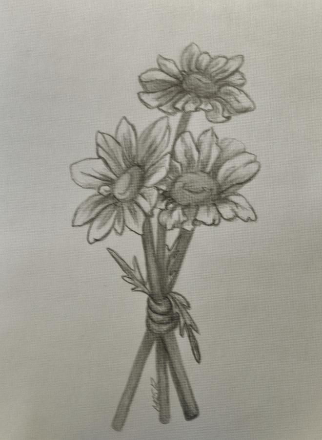 660x900 Three Daisies Drawing By Mary Simms