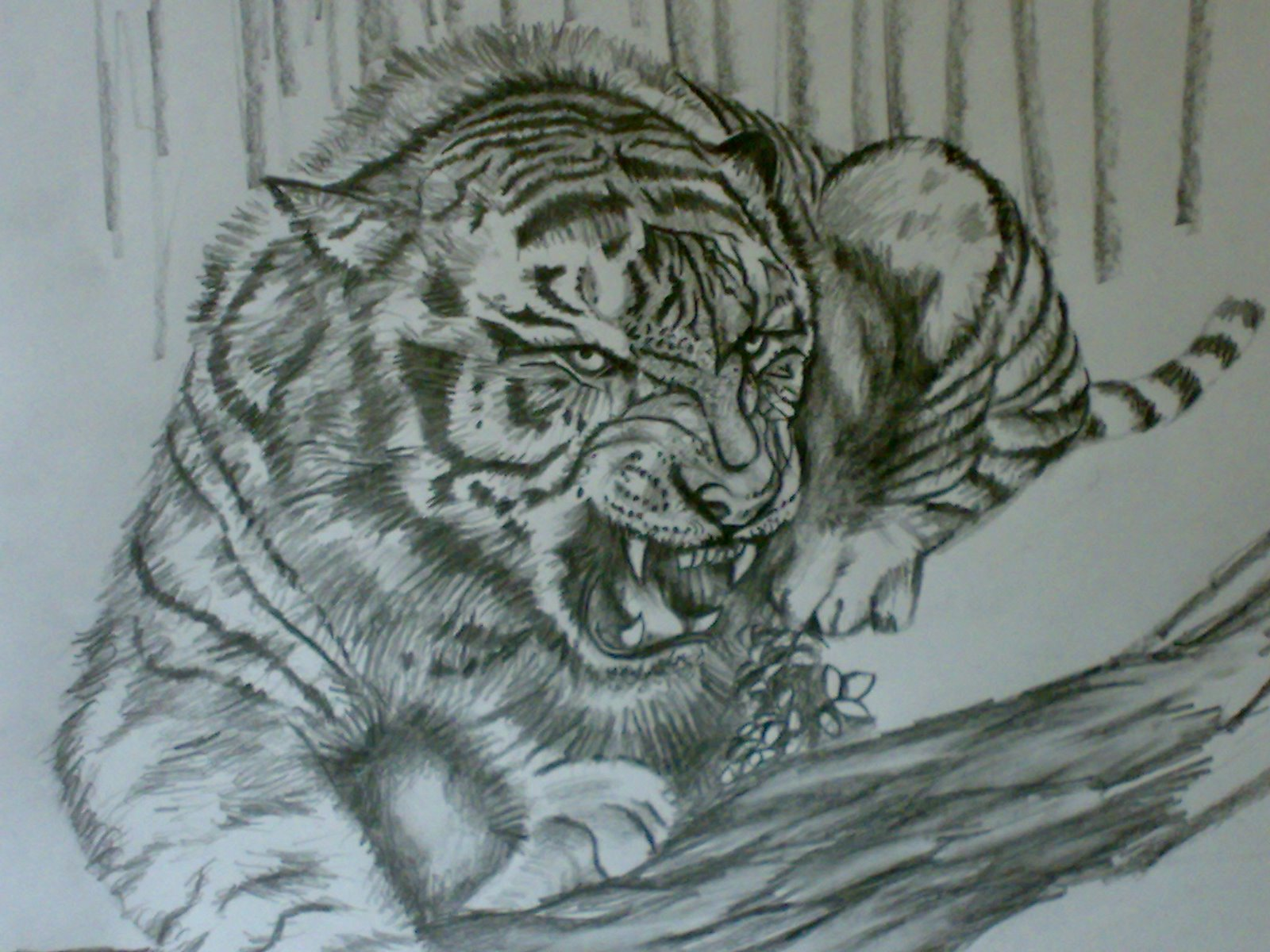 1600x1200 Ferrocious Feline Tiger Claw Lion Animal Drawing Forest