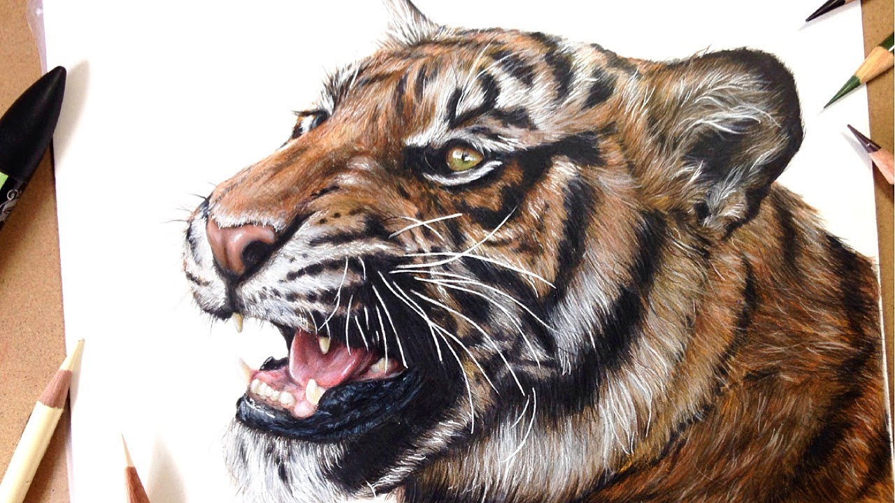 1280x720 How To Draw A Realistic Tiger Marker + Coloured Pencil Drawing