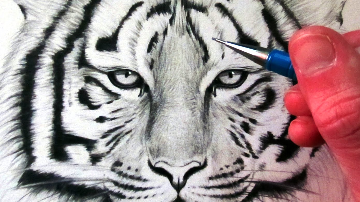 1390x782 How To Draw A Tiger