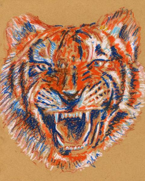480x600 How To Draw A Tiger
