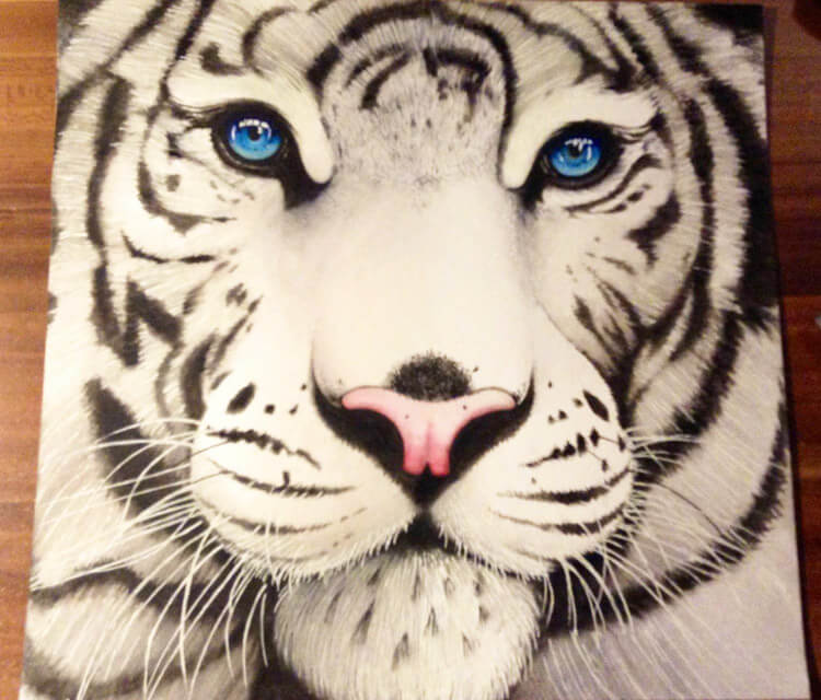 750x640 White Tiger Drawing By Miriam Galassi No. 324