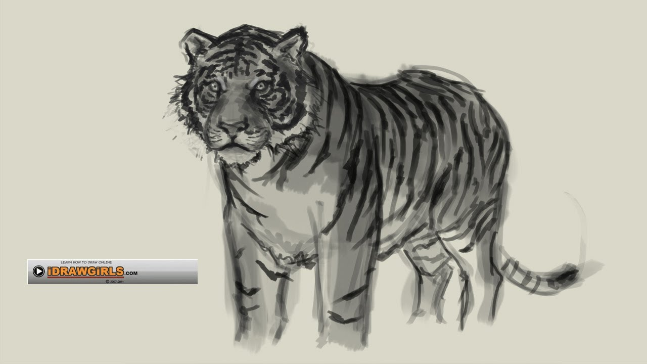 1280x720 How To Draw Tiger