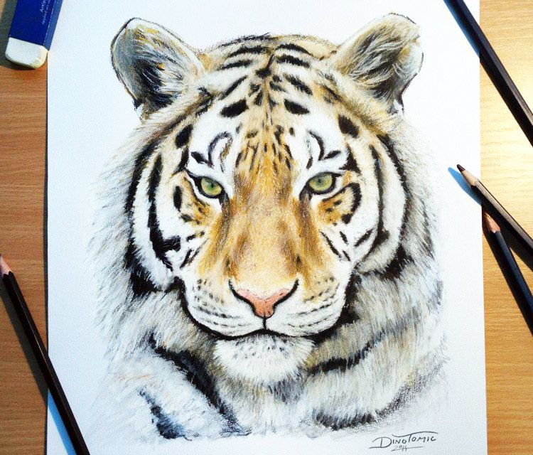 750x640 Color Tiger Drawing By Dino Tomic Tegninger Tatoo