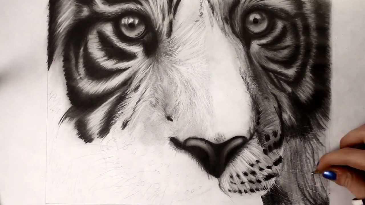 Tiger Face Drawing Pencil at GetDrawings | Free download