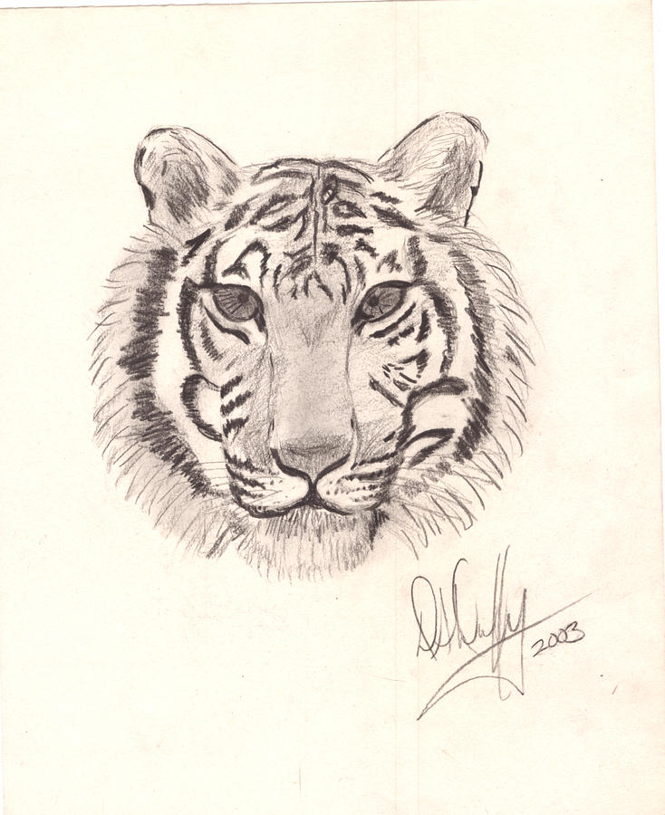 Tiger Head Drawing At Getdrawings Com Free For Personal Use Tiger