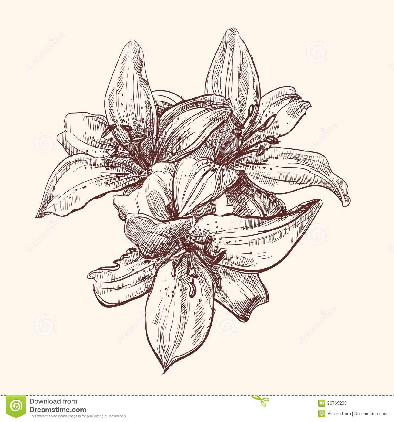 It is a picture of Crazy Tiger Lily Flower Drawing