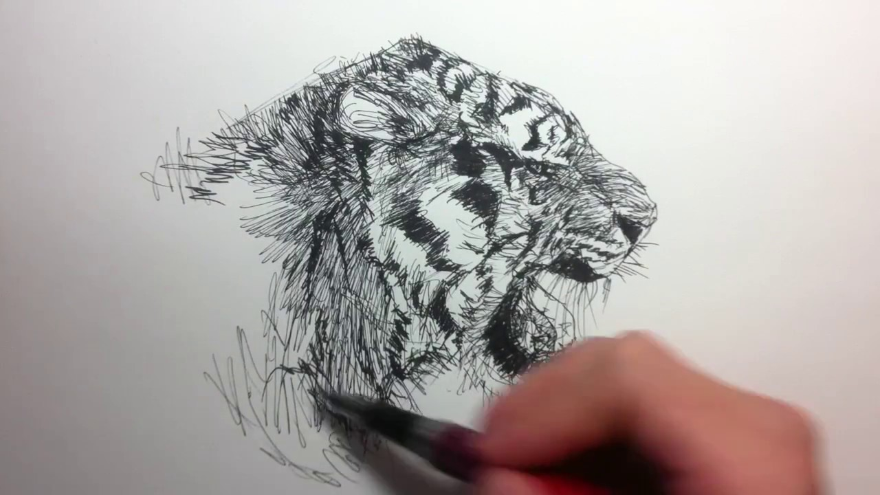 1280x720 Fountain Pen Sketch How To Sketch A Tiger