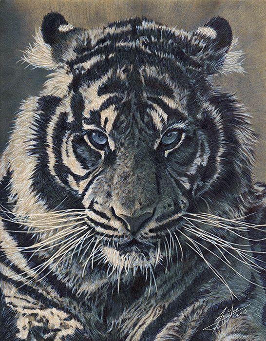 546x700 Pencil Amp Pen Drawing Of A Tiger