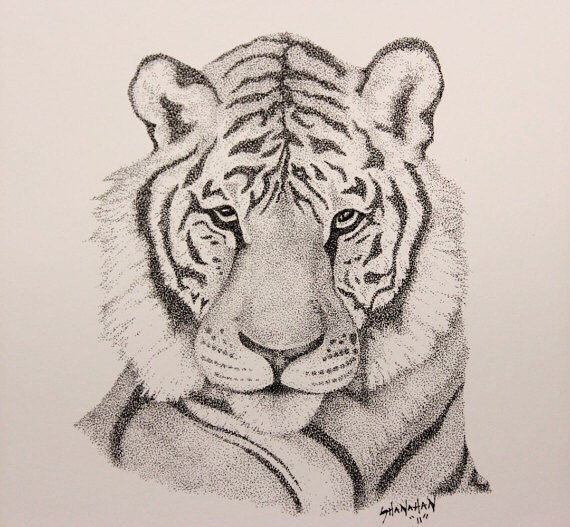 570x527 Tiger Animal Drawing Stipple Pen And Ink By Shanahanprints Baby