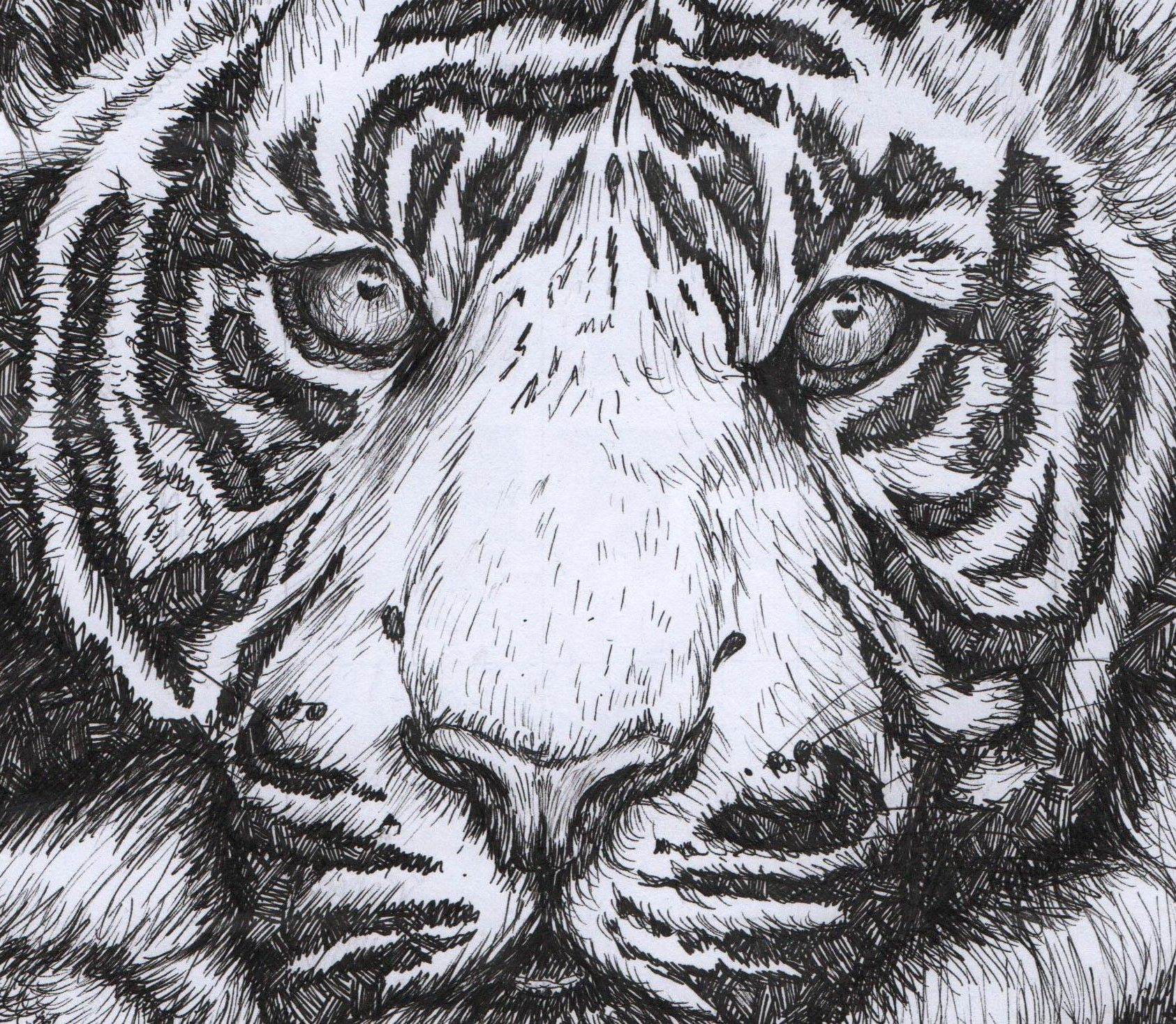 1685x1468 Tiger Illustration, Tiger Art Gift, Original Artwork, Pen Drawing